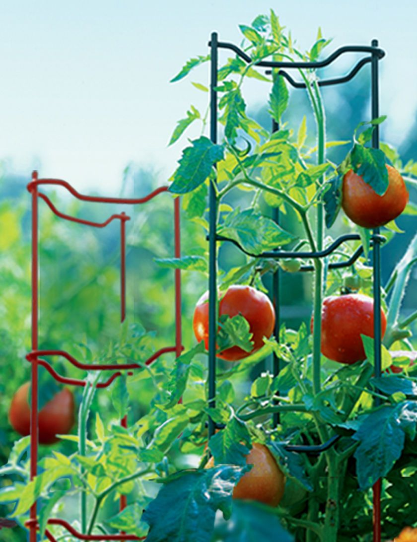 Tomato Stakes, Tomato Cages, Tomato Ladders | Gardeners Supply