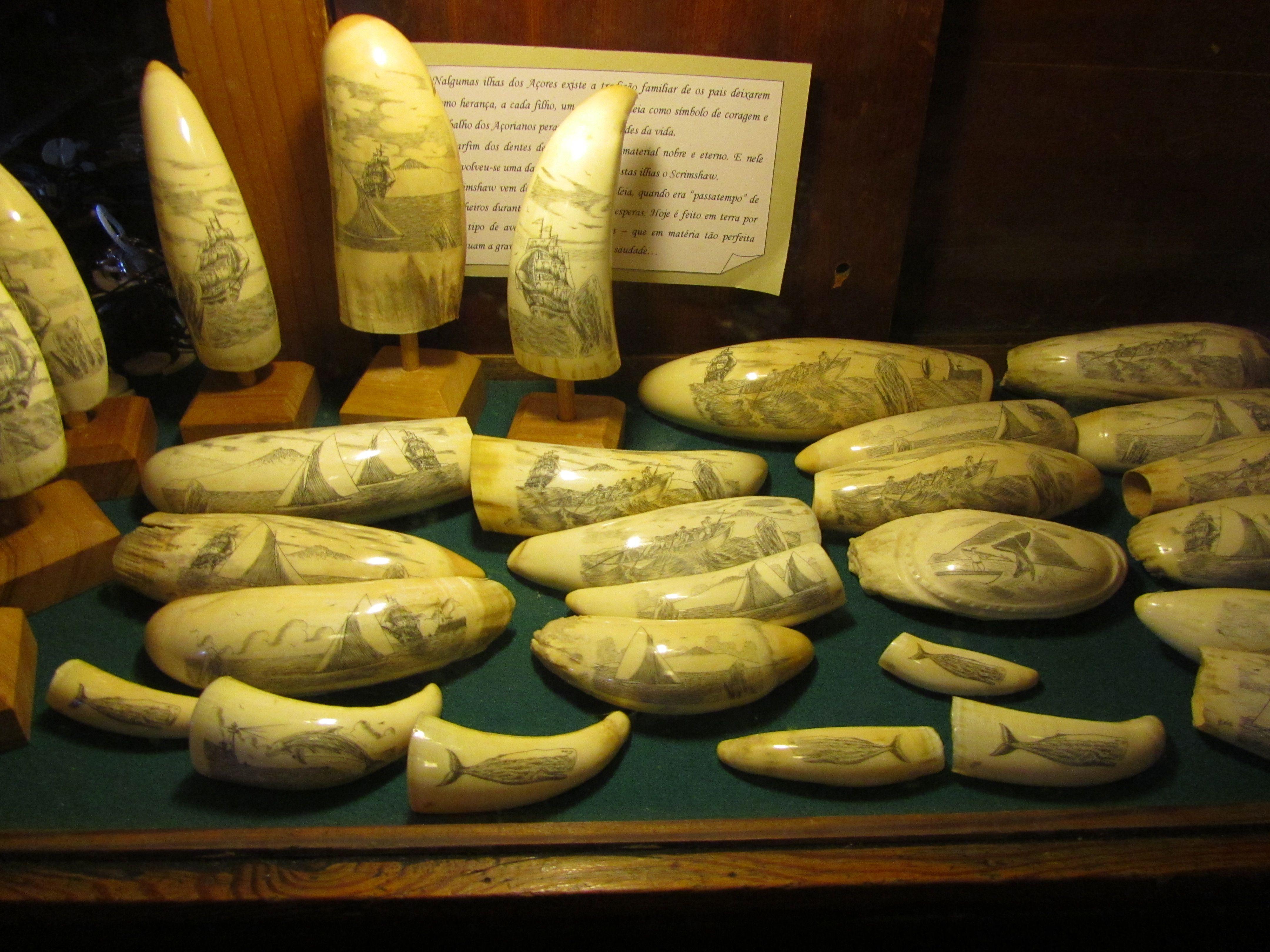 Risultati immagini per peter café sport whale teeth