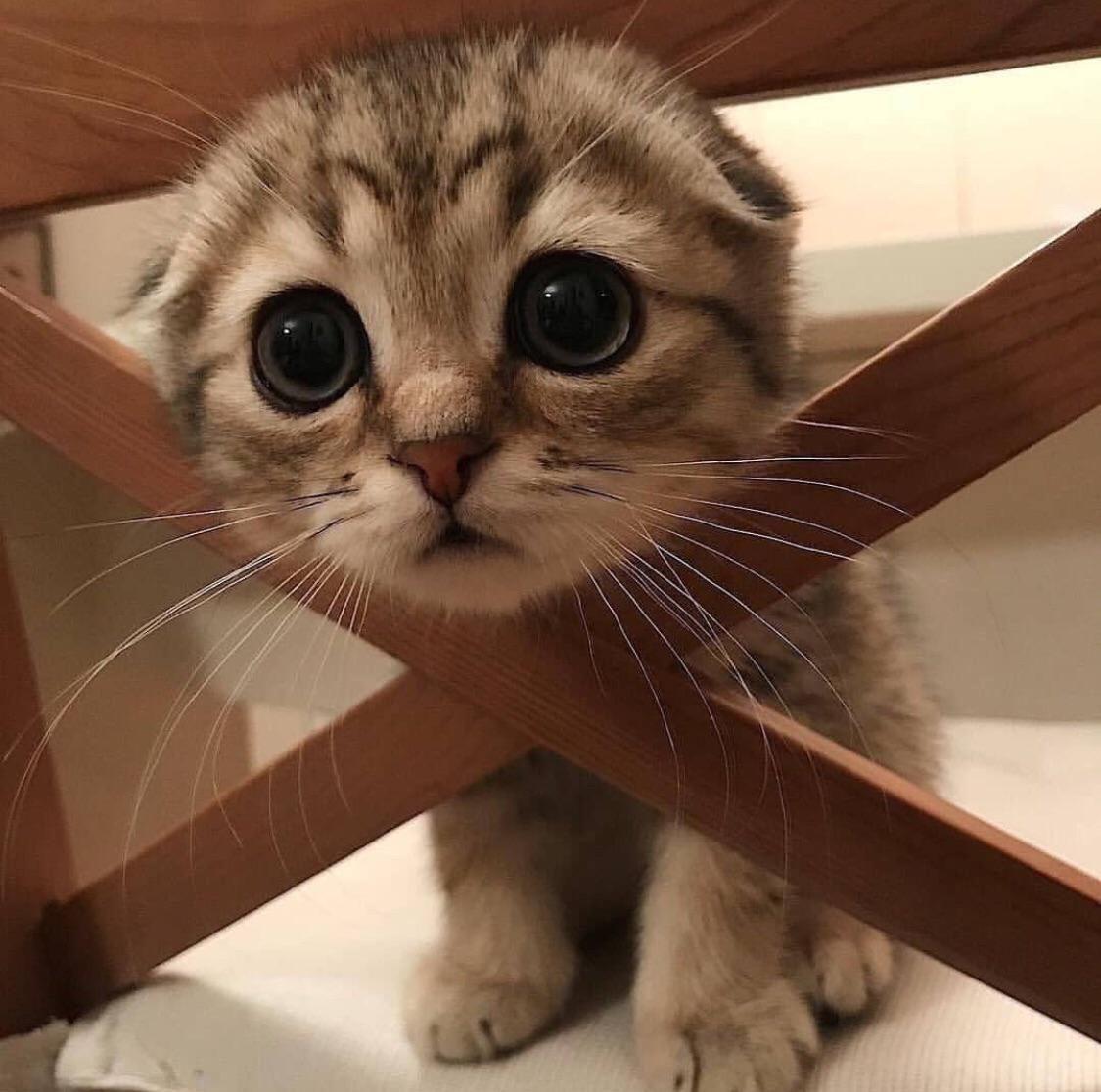 Free The Poor Fellahttps I Redd It Qs78t1pydkb31 Jpg Cute Cat Gif Cute Cats Cute Animals
