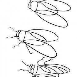 Dessins De Cigales Recherche Google Dessin Insecte Mouton Dessin Dessin Coloriage