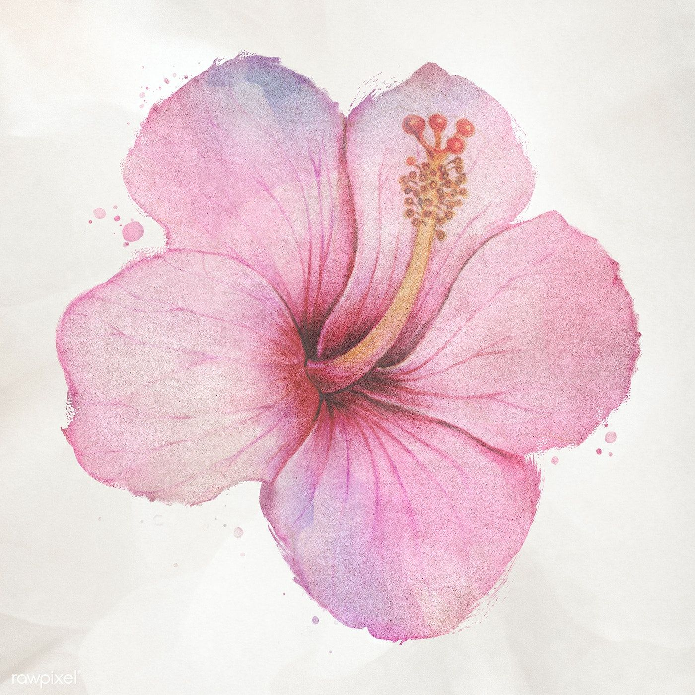 Download Premium Illustration Of Hand Drawn Pink Hibiscus Flower In 2020 Hibiscus Drawing Watercolor Flowers Flower Painting