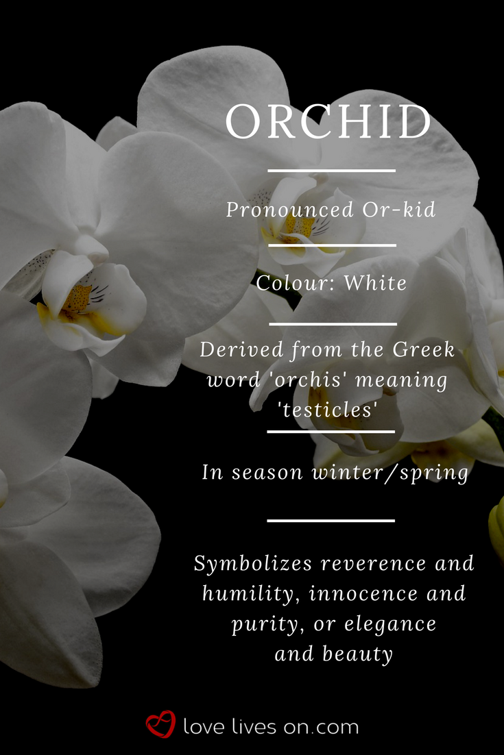 White orchid meaning white orchids symbolize reverence humility white orchids symbolize reverence humility innocence purity or elegance beauty making it the perfect flower for a funeral arrangement or sympathy izmirmasajfo