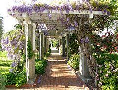Arbor Wisteria Trellis Cottage Garden Romantic Garden Wisteria