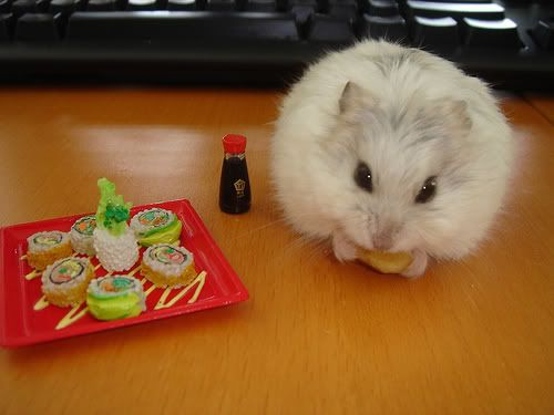 I Are Serious Fox Post Pics Of Funny Animals Funny Hamsters Hamster Pics Cute Hamsters