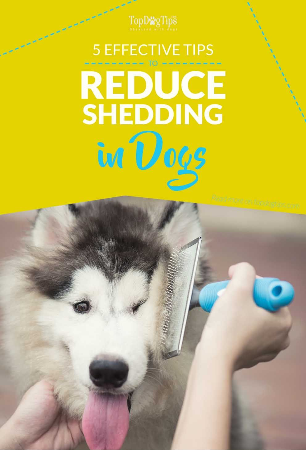 5 Most Effective Ways To Reduce Shedding In Dogs Best