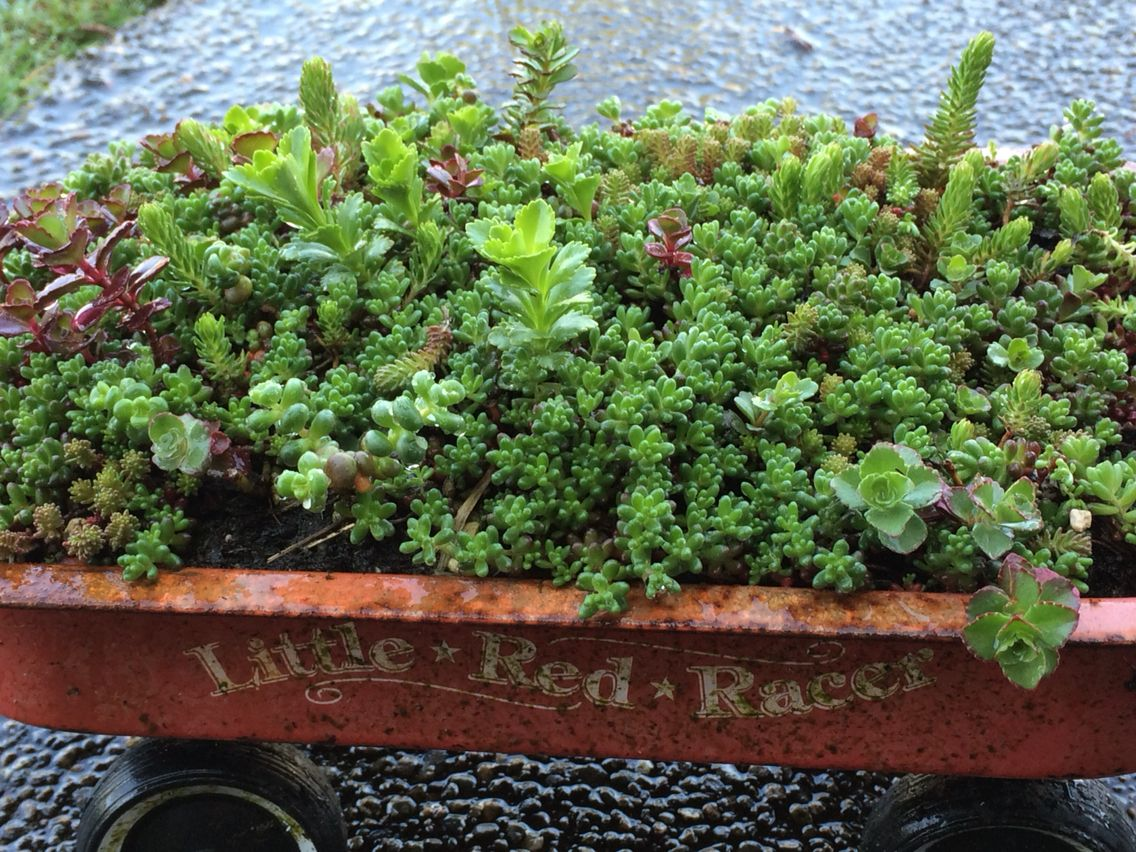 fun succulent planter made from a succulent tile purchased at