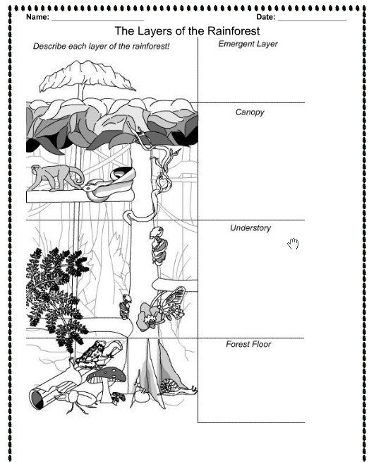Rainforest layers printable – Rainforest Worksheets