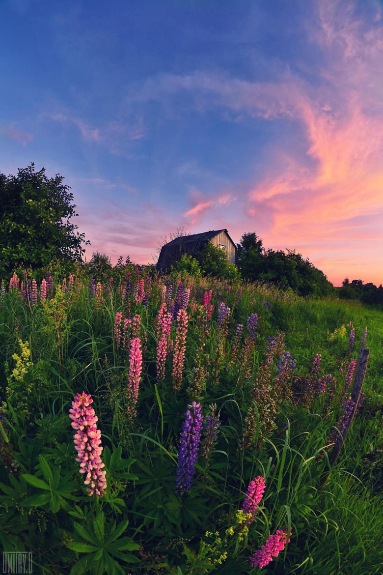 Artistic-realistic nature — 💙 Summer - time colors on 500px by Dmitry Doronin,...