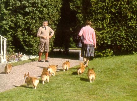 6 cute little Corgi butts (-: