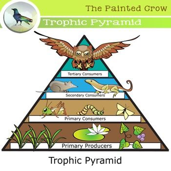 Create A Great Biology Resource With This 22 Piece Trophic Pyramid