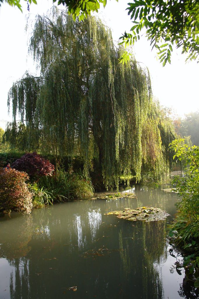 árvore e lago