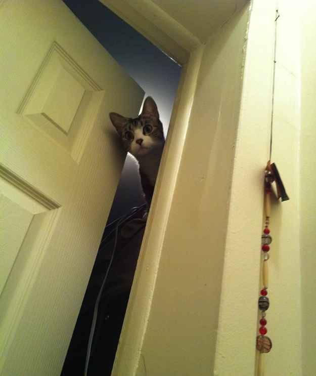 """""""I overheard something going on in there."""" Pets, Cats"""