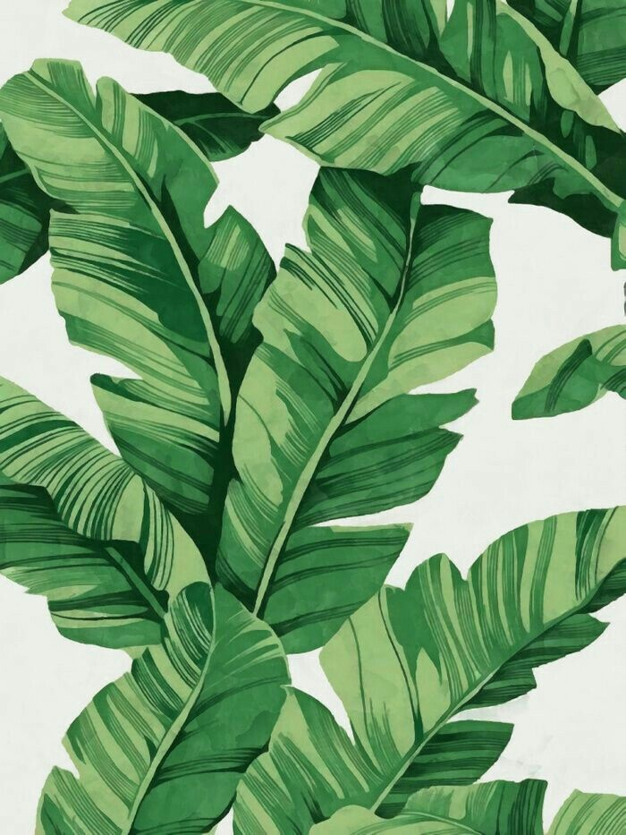 Banana leaf pictures images and stock photos istock