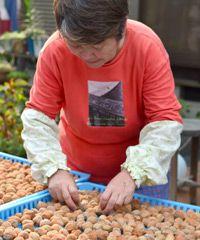 土用干しをする松崎のおばあちゃんの写真