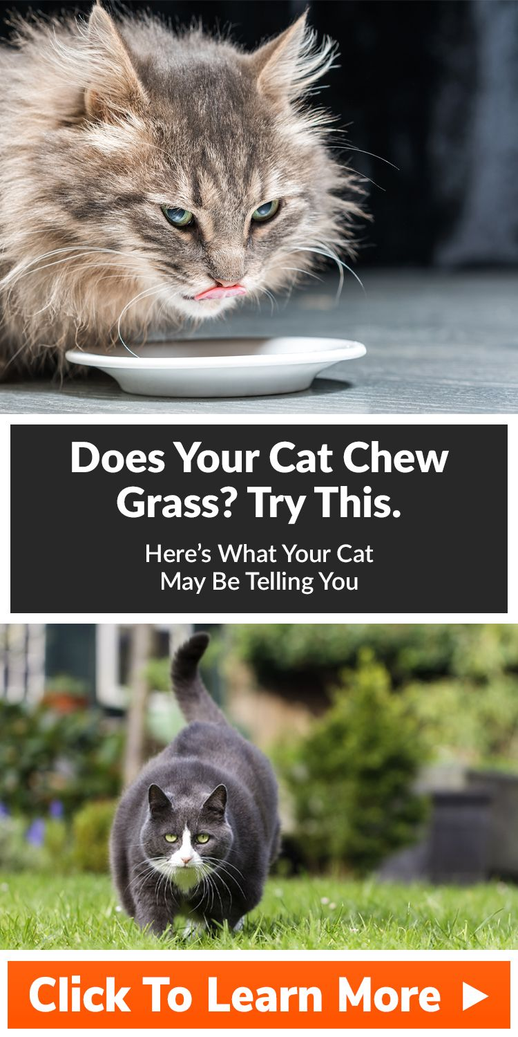 Does your cat eat grass or plants? (With images) Cats