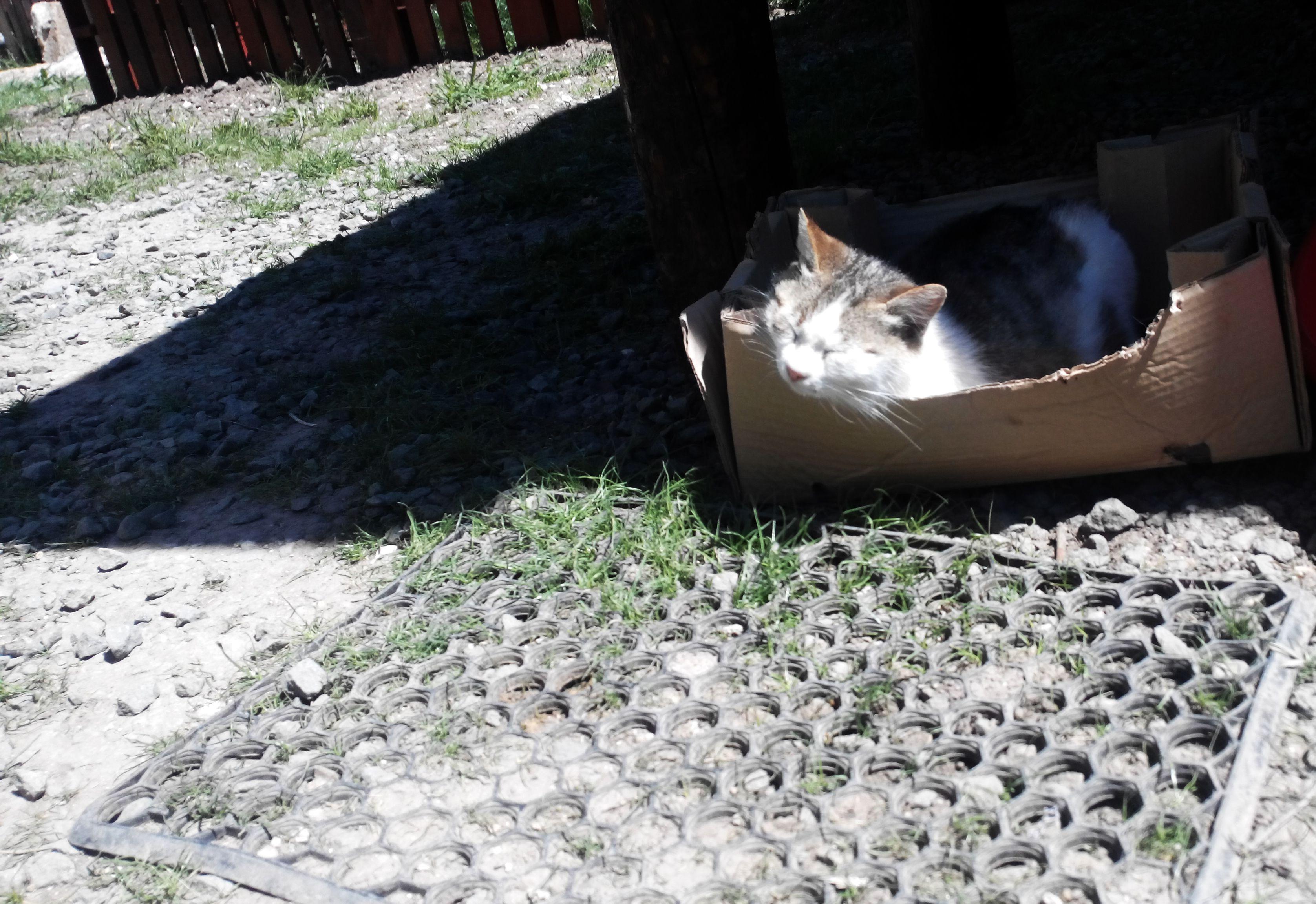 cat box Cats, Animals, Box