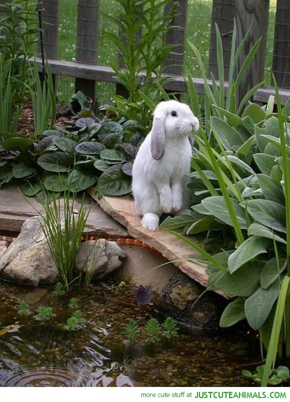 Bunny By The Pond