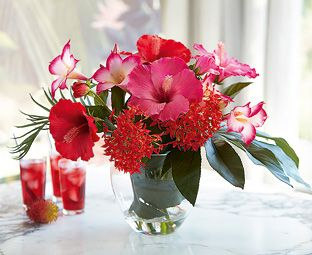 Product Flower Arrangements Hibiscus Plant Hibiscus