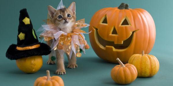 halloween k rbis schnitzen coole ideen pumkin pinterest halloween k rbis schnitzen. Black Bedroom Furniture Sets. Home Design Ideas