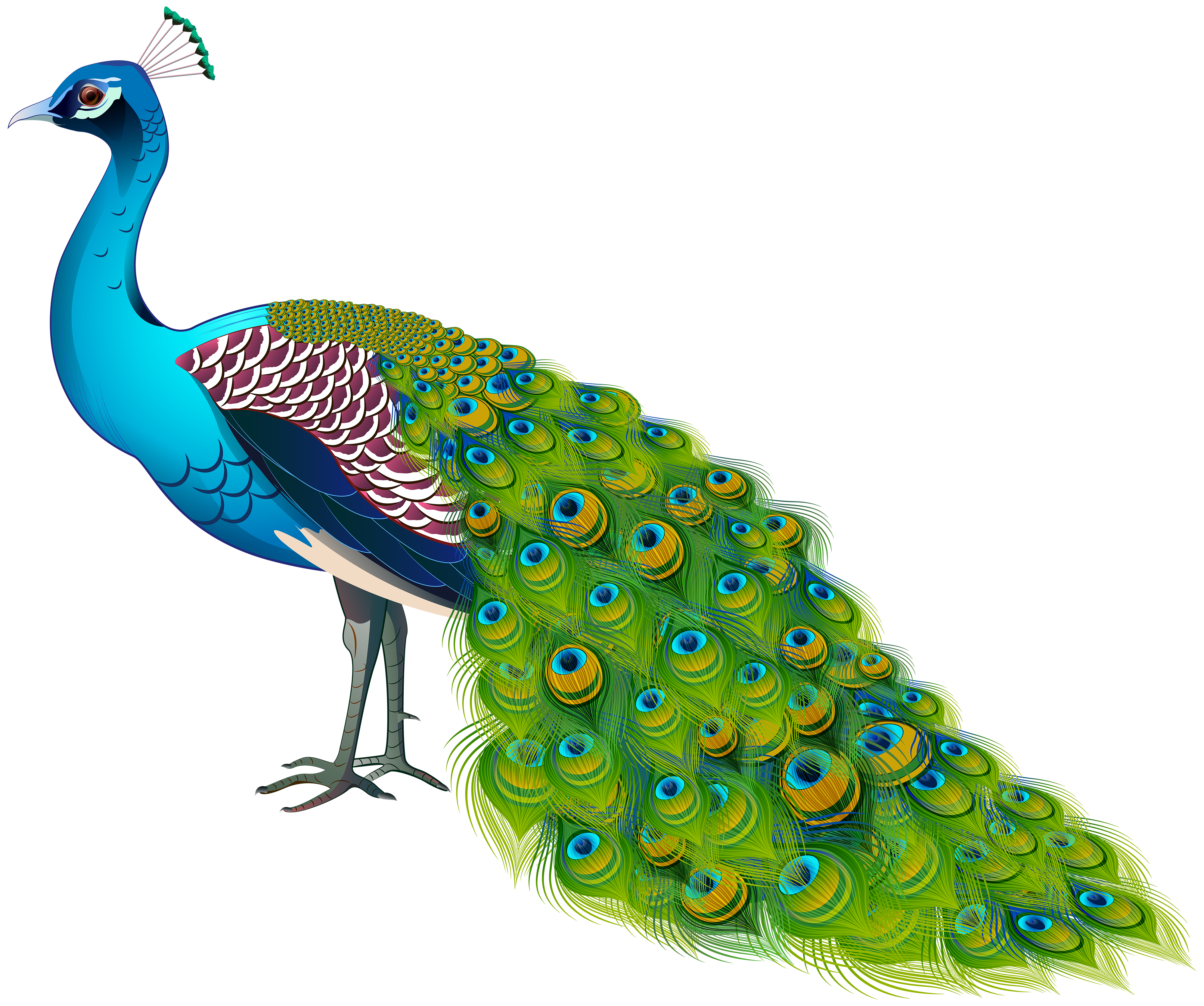 Peacock Transparent Image Gallery Yopriceville High
