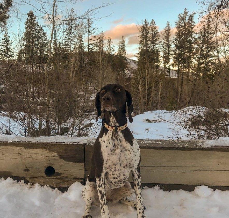 125 Best Pointer Dog Names Dog Names Best Dog Names Pointer Dog