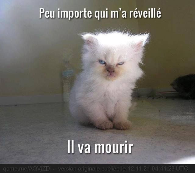 ;) MDR oh oui il a l'air très méchant .... | Image chat drole, Image drole animaux, Humour animaux