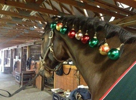 Horse Christmas Parade Costumes Google Search