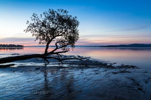 Tanilba Bay after Sunset by whitewithone Australia Tree Long