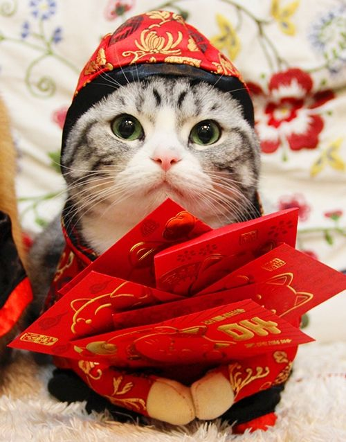 Chinese New Year Cat Costume