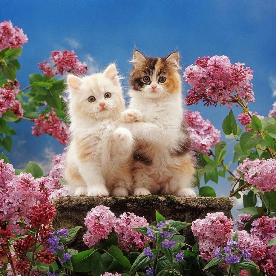 Pin by Ana Martins on Gatos | Pinterest | Cat, Kitty and Cat boarding
