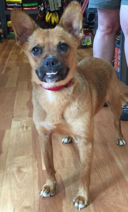 Bat Girl Is Absolutely The Best Dog Ever She Loves Other Dogs Cats And Every Single Human Friend She Meets She Loves To Play Dog Adoption Pet Adoption Dogs