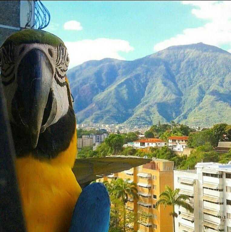 Reciclandoenelatico Página Web Oficial Reciclar Da Vida Caracas Venezuela Venezuela Paisajes