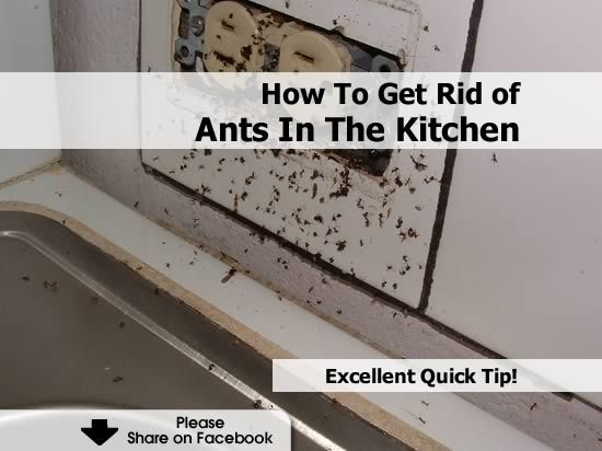 How To Get Rid Of Ants In The Kitchen - http://www.hometipsworld.com ...