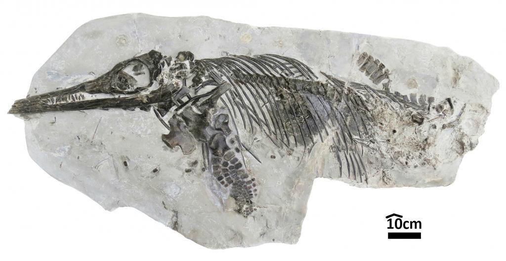 dinosaurie ben C14 dating Hur många datum innan du omräknas dating