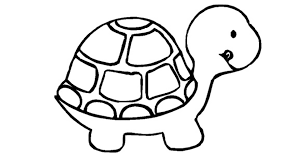 Turtle Coloring Pages For Preschoolers Photos