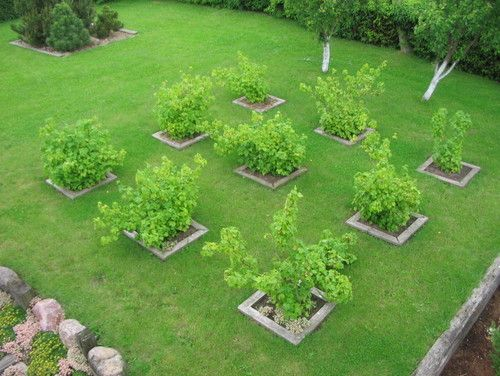 Fruit Orchards Design Pictures Remodel Decor And Ideas Page 4 Garden Layout Small Garden Design Orchard Garden