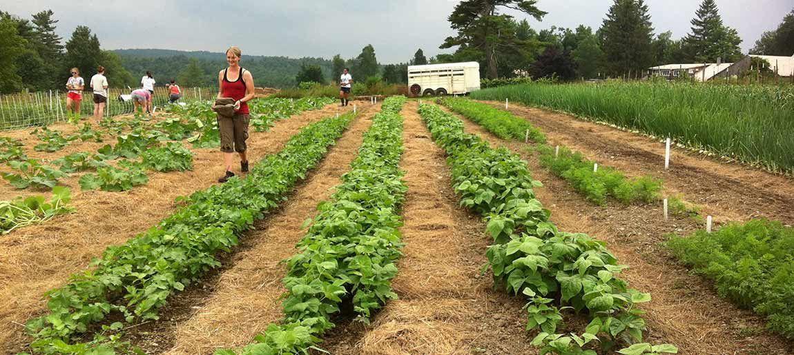Was wächst: Unkrautfreie Gartenarbeit | Färse International#färse #gartenarbeit #international #unkrautfreie #wächst