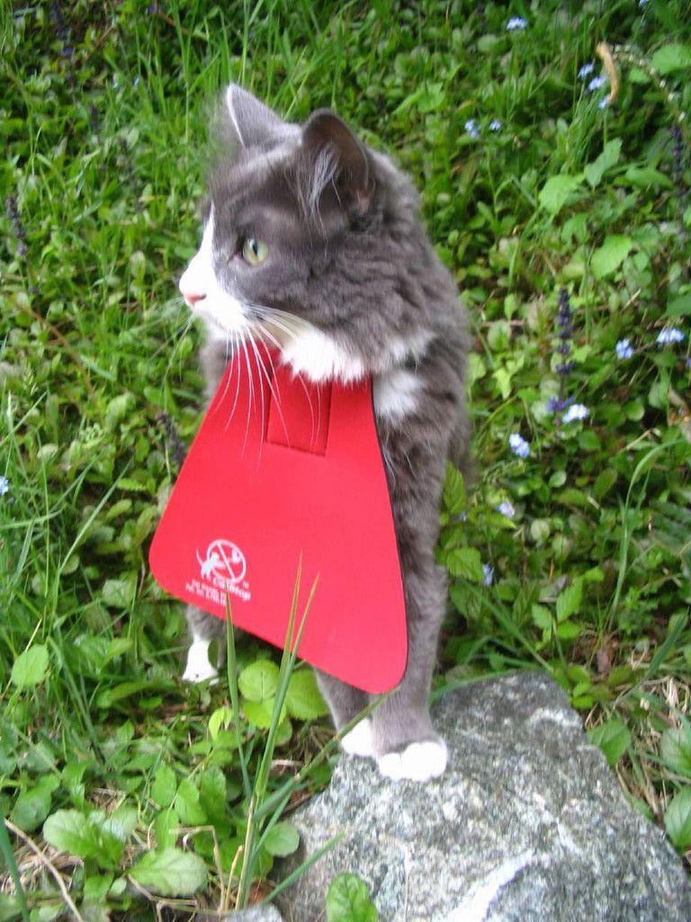 Cat Bib Cats Small Pets Animals