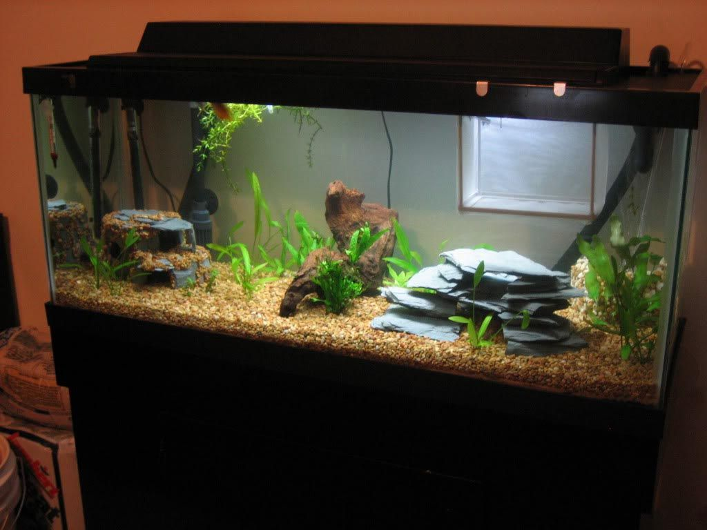 30 Gallon Long Aquarium Dimensions Diy Aquarium Aquarium 30 Gallon Fish Tank