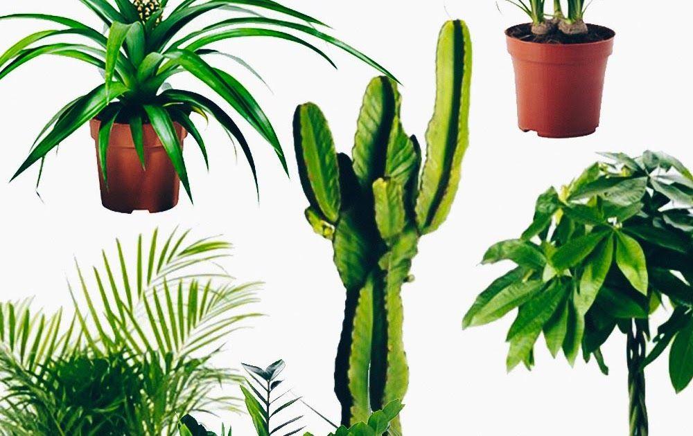 2017 March Boutique Glamour Wie Viel Licht Benotigen Zimmerpflanzen Ndr De Ratgeber 10 Zimmerpflanzen Die Wenig Licht Br Cactus Plants Plants Make A Donation