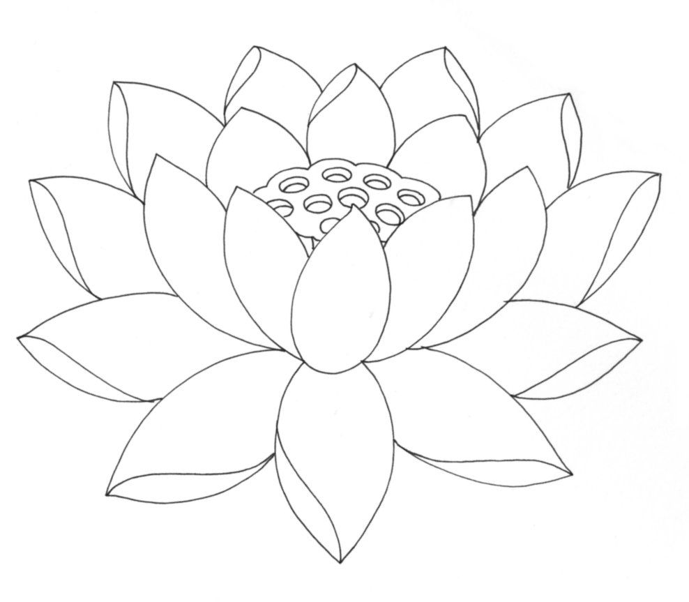outline pictures flowers coloring pages for kids | Free Printable Lotus Coloring Pages For Kids | Lotus flower colors, Flower drawing images ...