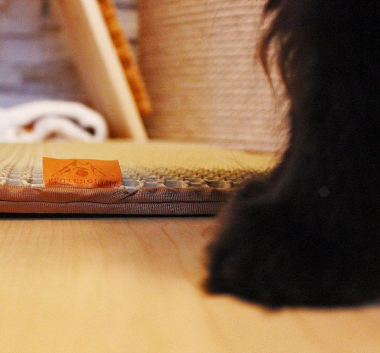 Katzenstreu Matte Von Pfotenolymp Ultimativer Katzenstreuvergleich In 2020 Katzenstreu Matte Katzen Klo Katzenzubehor