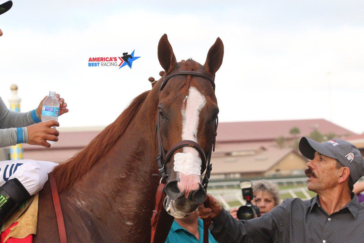 Americasbestracing on with images thoroughbred horse
