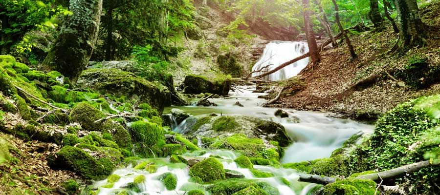 Payment for Ecosystem Services (PES): An Innovative Tool for ...