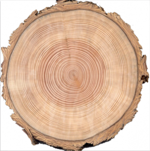 Captivating Explore Tree Rings, Brave, And More!