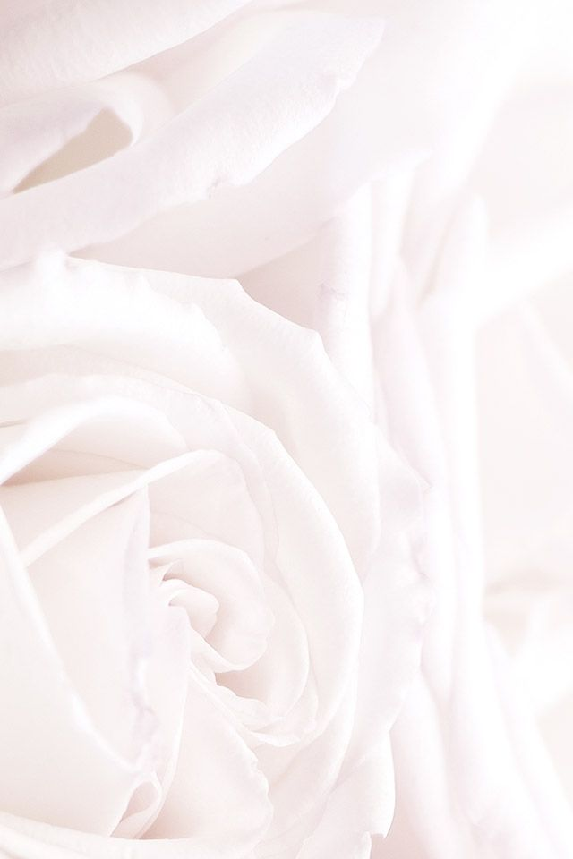 White Roses Phone Iphone Wallpaper Background Lock Screen With