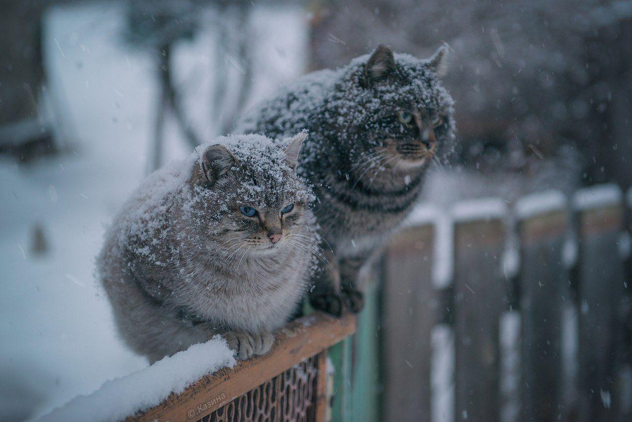 город янаул картинки ожидаем зиму обладают