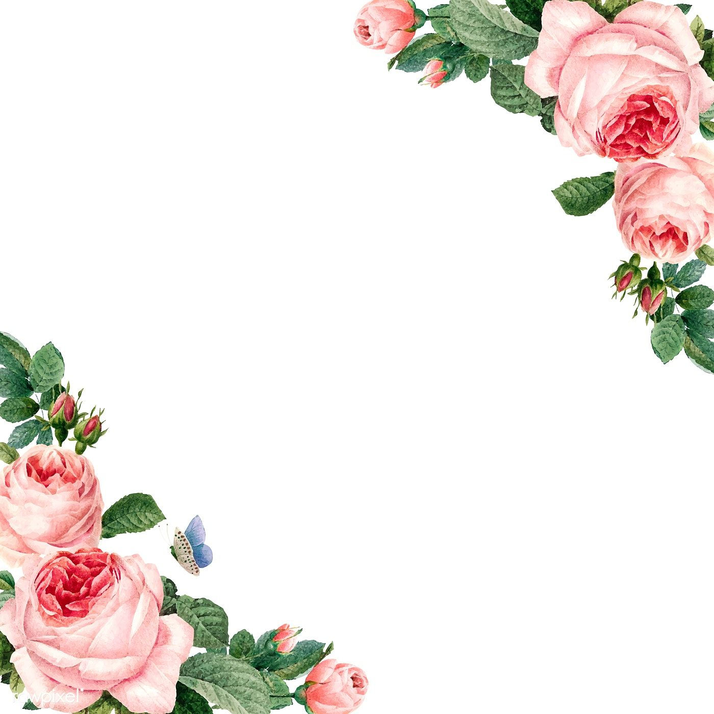 Hand Drawn Pink Roses Frame On White Background Vector Free Image By Rawpixel Com Busbus Rose Frame How To Draw Hands Pink Background