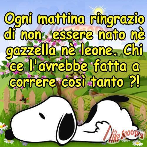 Snoopy italiano buongiorno divertente citazioni vignette for Vignette buongiorno divertenti