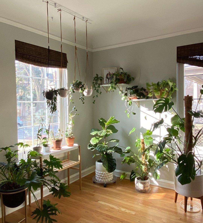 14+ Hanging plants room decor info